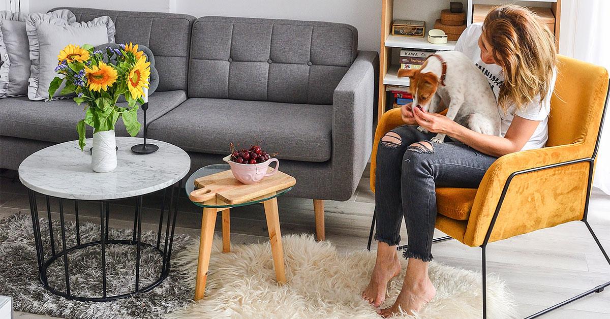 Sofy i fotele odporne na zwierzęta. Jaki model mebla i materiał obiciowy wybrać?