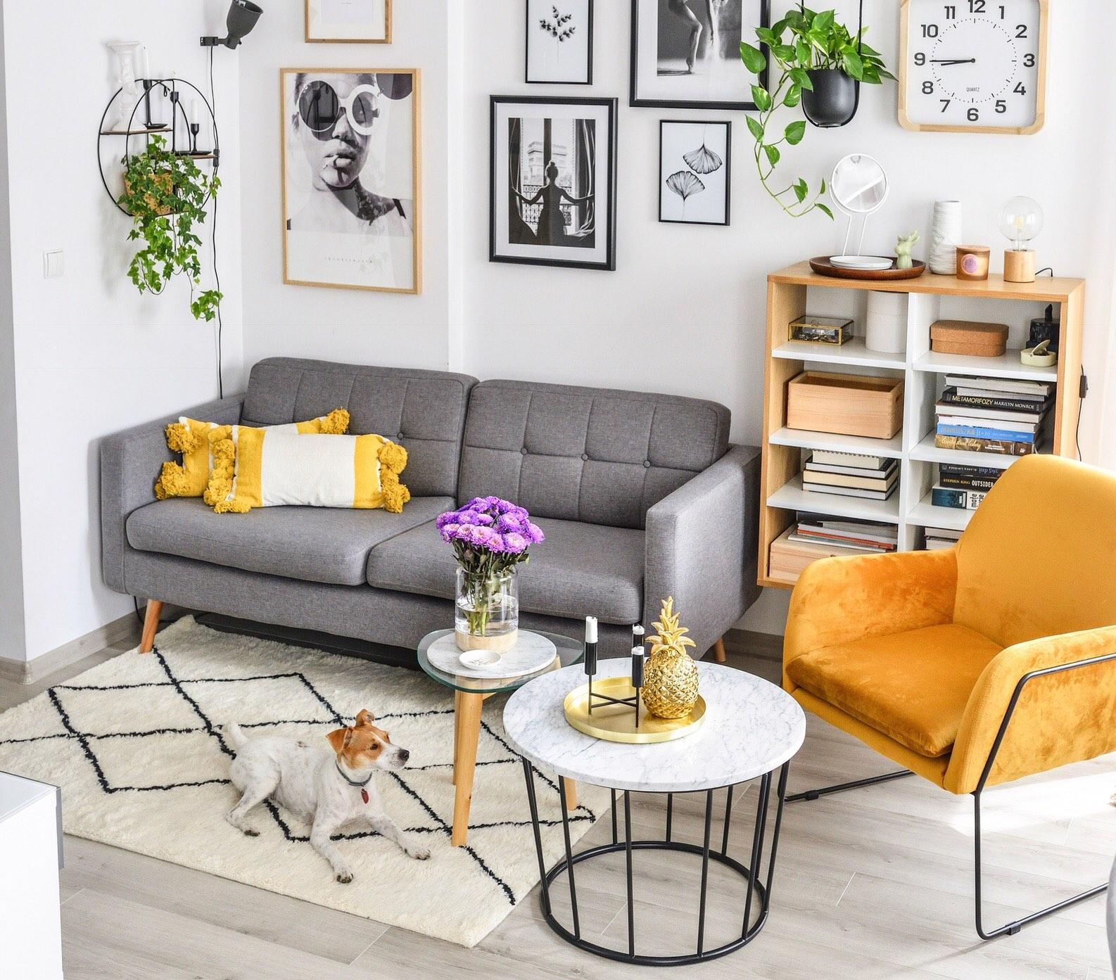 Szara sofa Brest żółty welurowy fotel Foxe